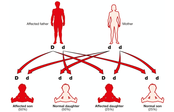 Diagram showing hereditary passing of dominant gene