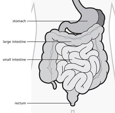 GI tract abdomen